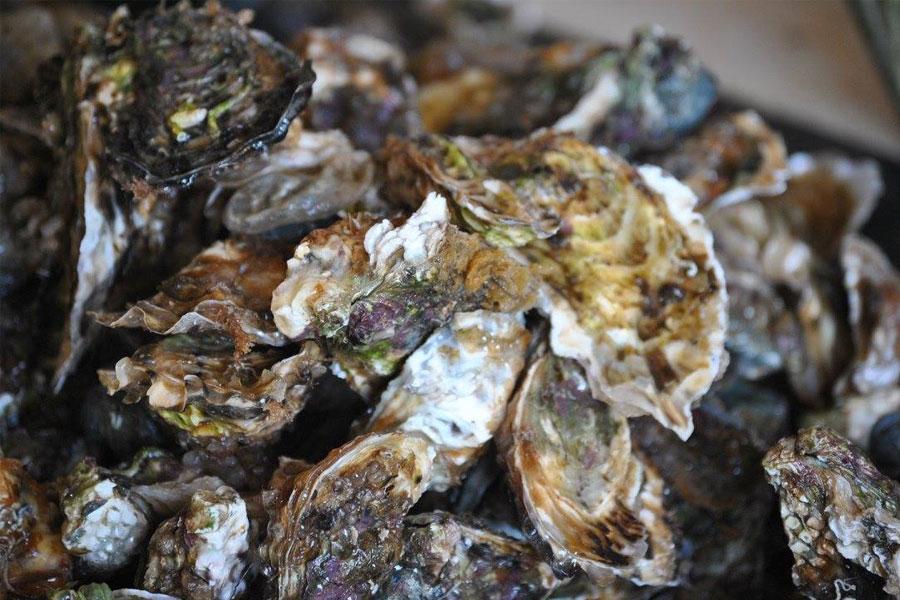 Nos huîtres en cours de nettoyages