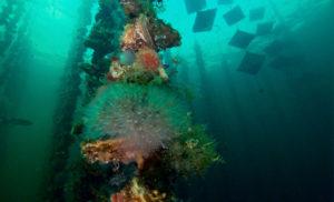 Fond marin de l'étang de thau