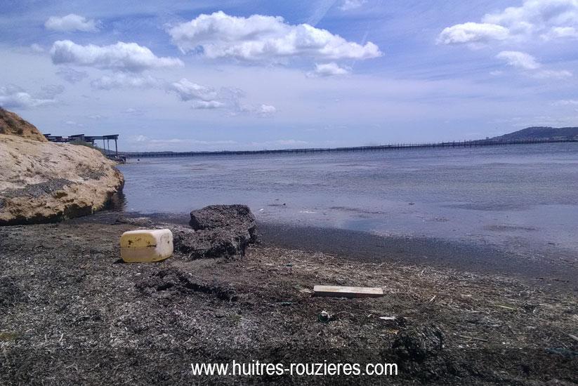 Photo nettoyage plage de l'étang de thau